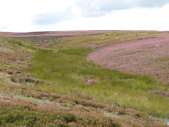 Backstone Cleugh and Herds Law