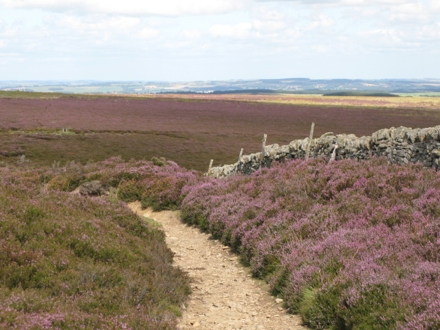 Track south of Backstone Cleugh