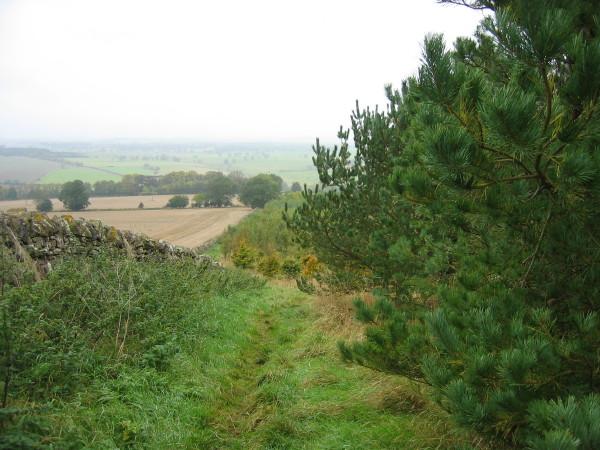 Bridleway near New Bingfield