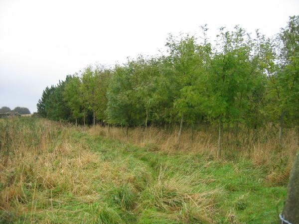 Unnamed Plantation near New Bingfield