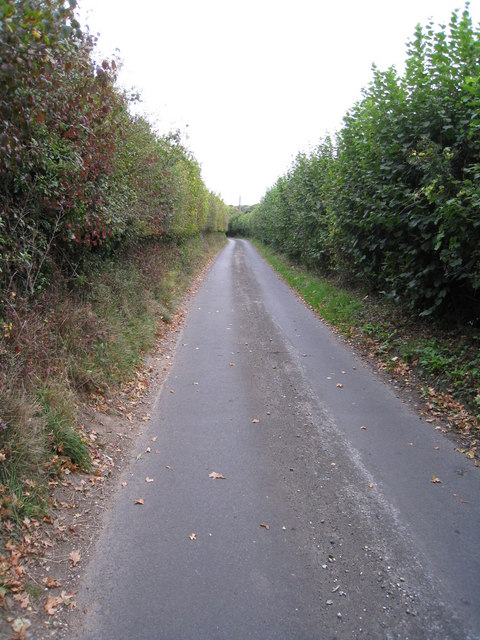 High hedges, narrow lane - North Hampshire