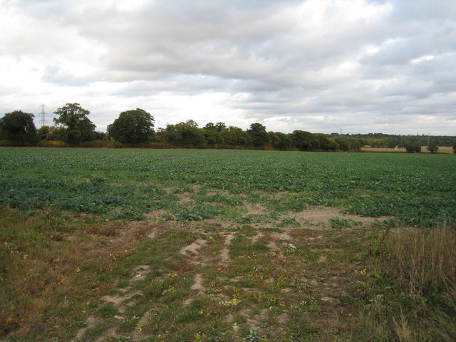 Cultivated land - Poors Farm