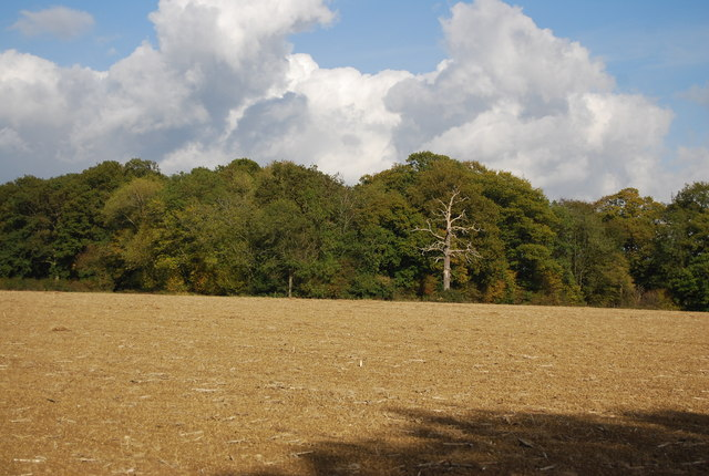 Woodland across a ploughed field