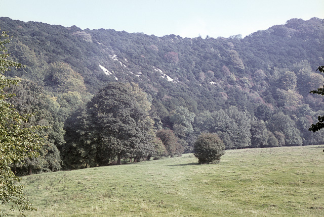 Woodland on Old Winchester Hill in the sixties