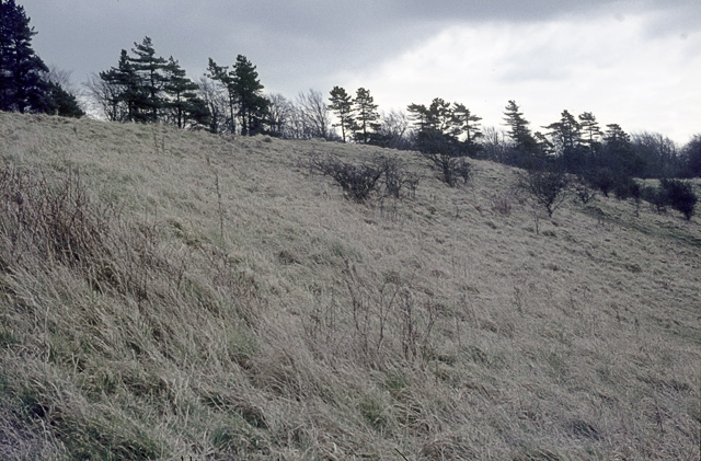 Old Winchester Hill grassland in the sixties