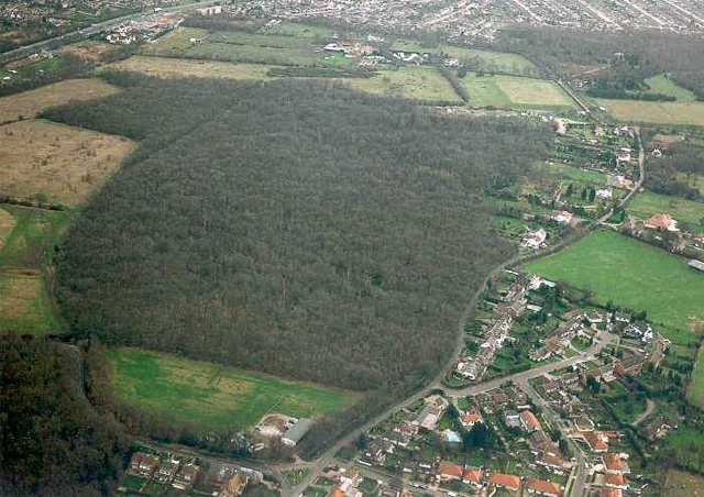 Aerial view of Pound Wood nature reserve