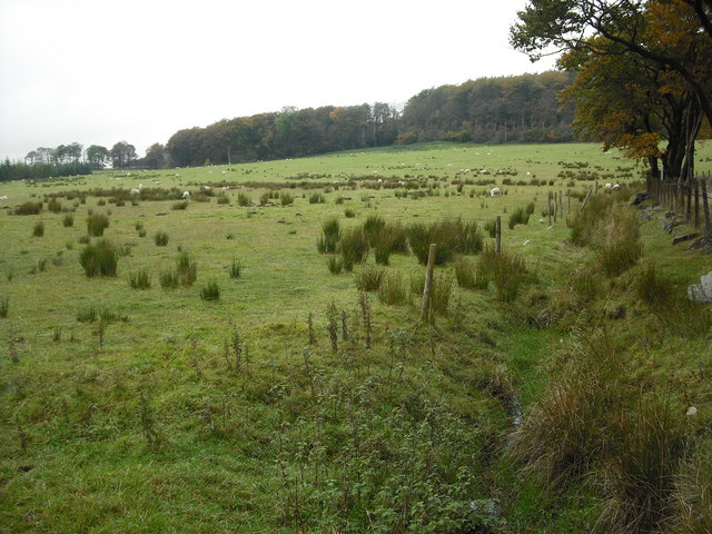 Rough pasture near Shotts