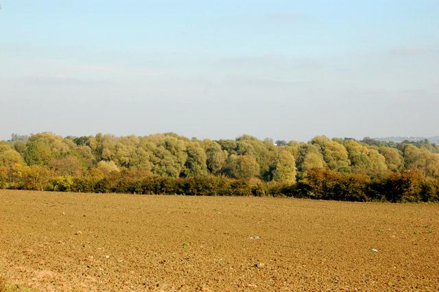Woodland north of Stapenhall Farm