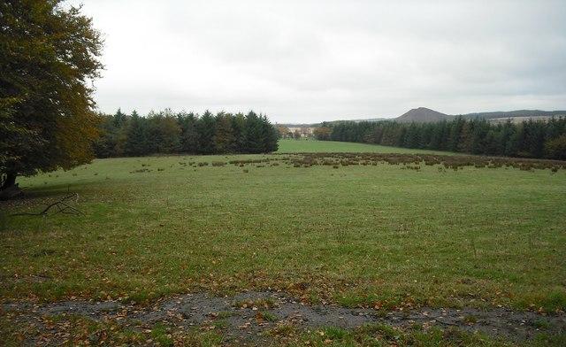 Grassland near Shotts