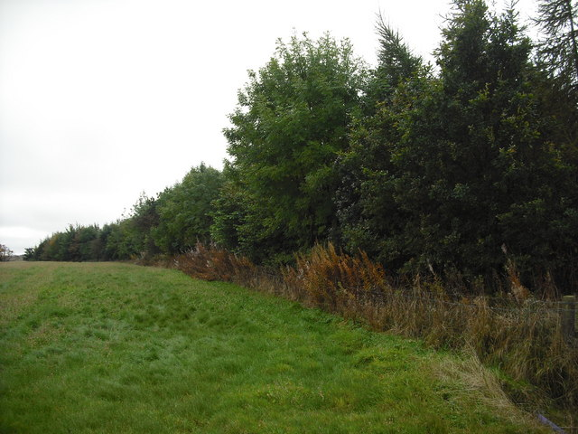 Strip wood south of Blaeberryhill Road