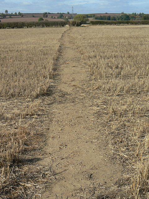 Cornfield footpath