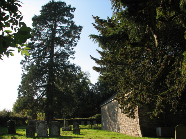 Penterry church yew