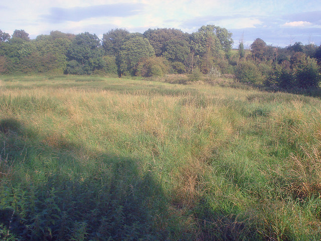 Meadow at Swannington Common