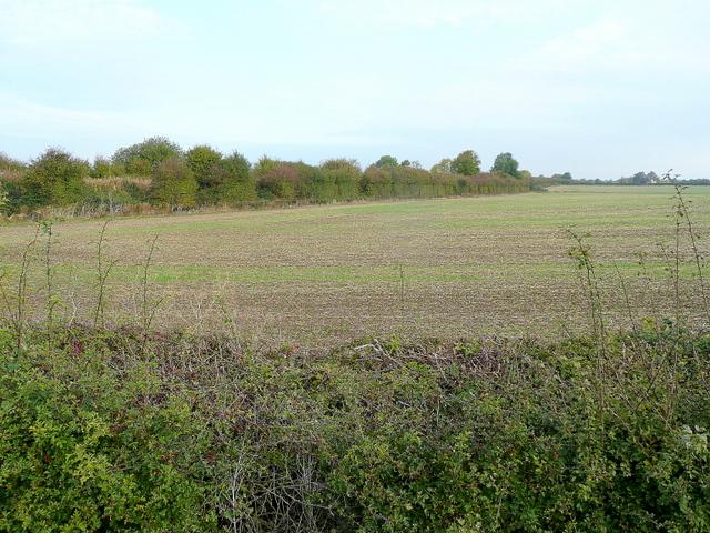 Arable land west of Laverton