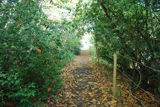 Footpath through Irons Wood