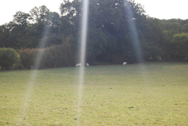 Sheep grazing in the shade