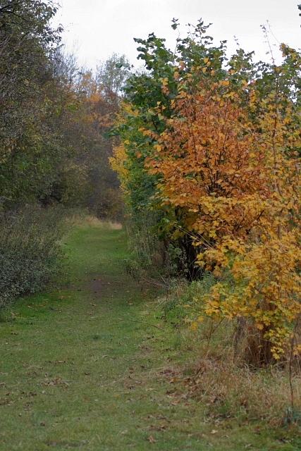 Path Through Stoney Field