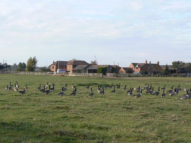 Coneygre Farm