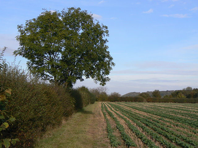 Field footpath near Hoveringham