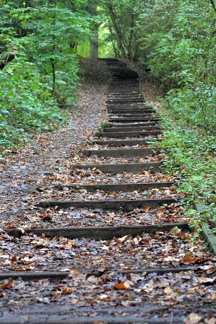 Steps Through Thorpe Wood