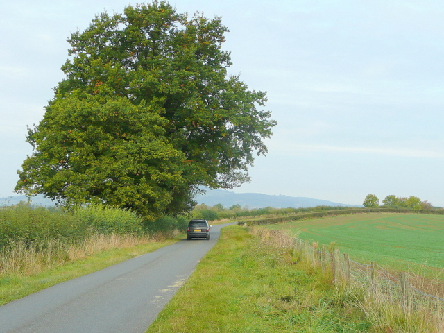 Oak by a lane