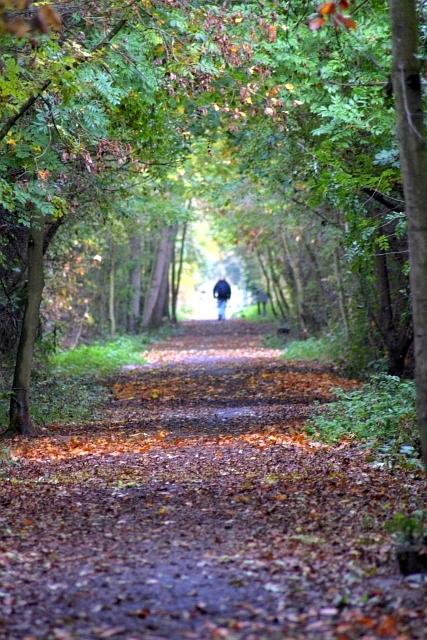 Castle Eden Walkway