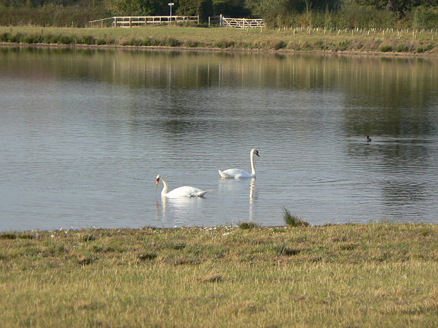 Swans on New Workings Pit