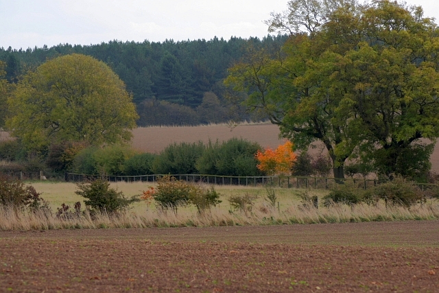 Field Boundaries, Woodend Farm