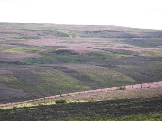 Panorama of Westburnhope Moor with heather in bloom (2: West of S - Embley Edge)