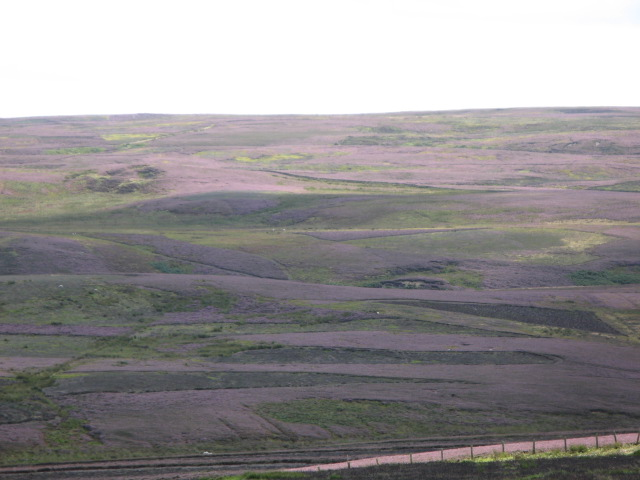 Panorama of Westburnhope Moor with heather in bloom (3: S)