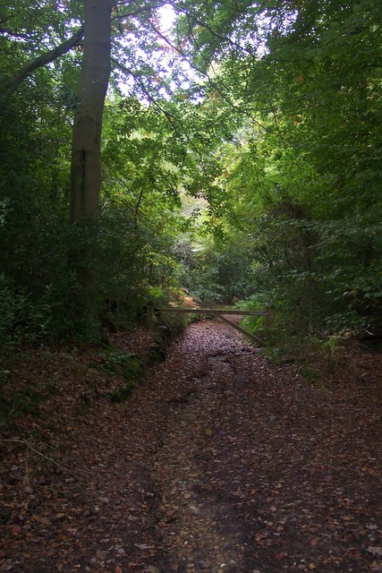 Track in Scords Wood