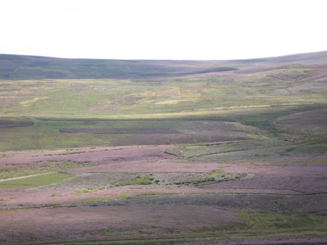 Panorama of Westburnhope Moor with heather in bloom (4: East of S)