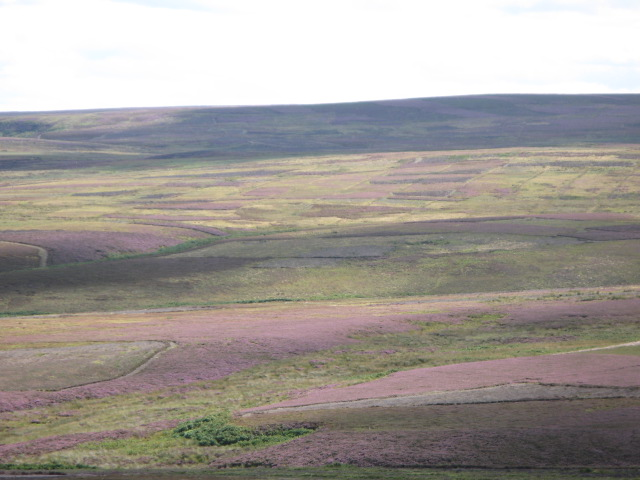 Panorama of Westburnhope Moor with heather in bloom (5: SSE - Broad Mere)