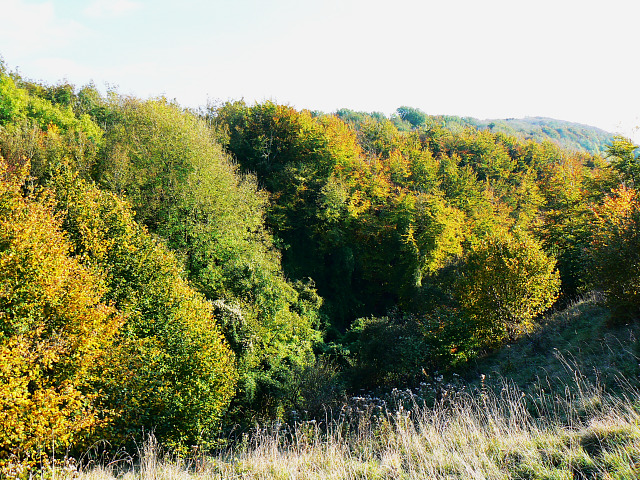 Roundway Hill Covert, Roundway CP