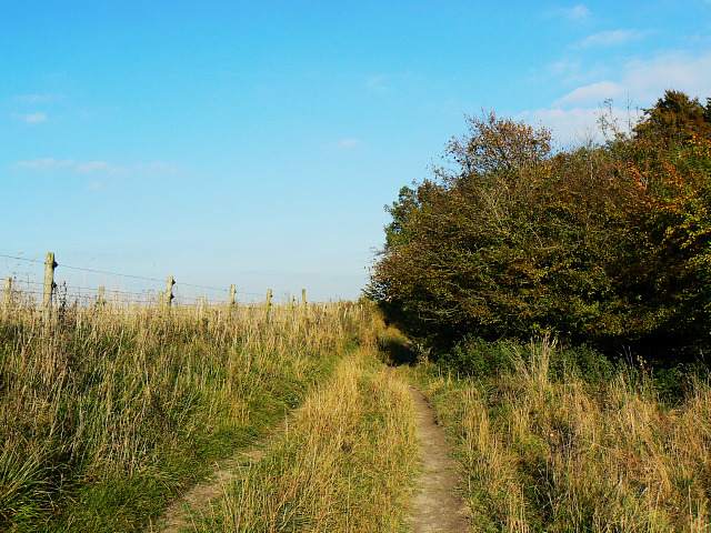 Mid Wilts Way, near Roundway Hill Covert, Bromham CP