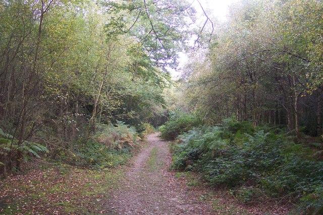 Bridleway in Scords Wood