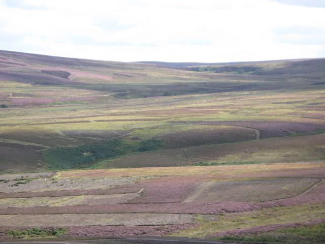 Panorama of Westburnhope Moor with heather in bloom (6: SSEb - Rowantree Cleugh)
