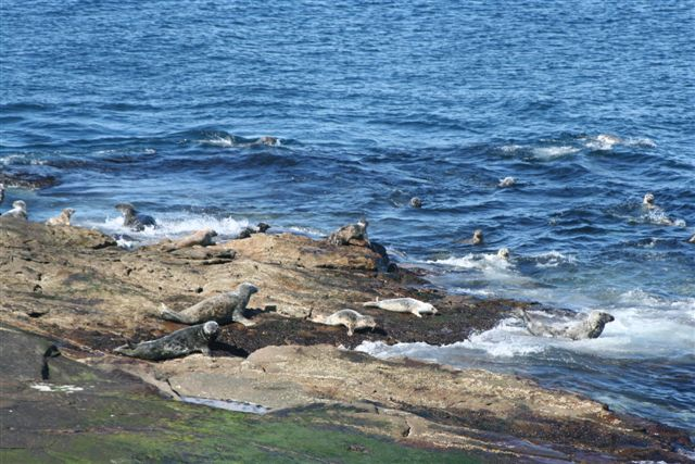 Seals on the North Croo