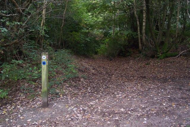 Footpath junction in Scords Wood