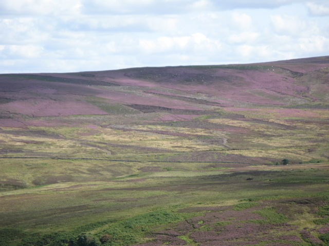 Panorama of Westburnhope Moor with heather in bloom (9: ESE - Upper valley of the Linn Burn)