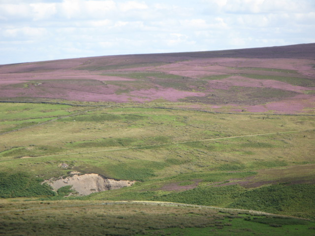 Panorama of Westburnhope Moor with heather in bloom (10: ESEb - Valley of the Linn Burn and the Long Drag)