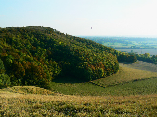 The western edge of Roundway Hill Covert, Bromham CP