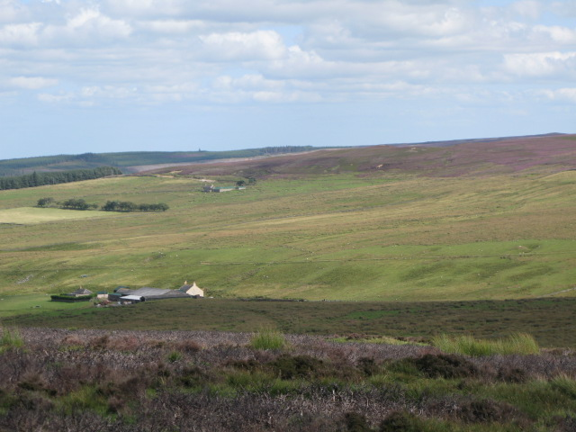 Panorama of Westburnhope Moor with heather in bloom (12: Eb - Westburnhope and Cocker Shield)