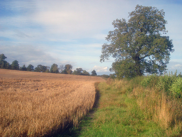 Barley field east of Peggs Green