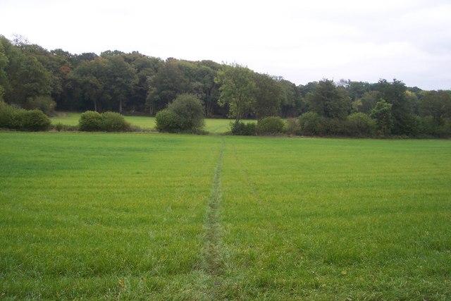 Footpath towards Trowler's Wood
