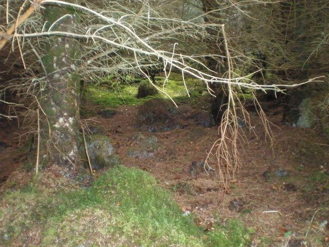Garbh Dhoire forest floor.