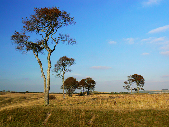 Trees at Oliver's Castle, Bromham CP