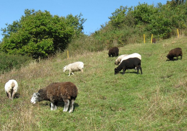 Herdwicks and other sheep