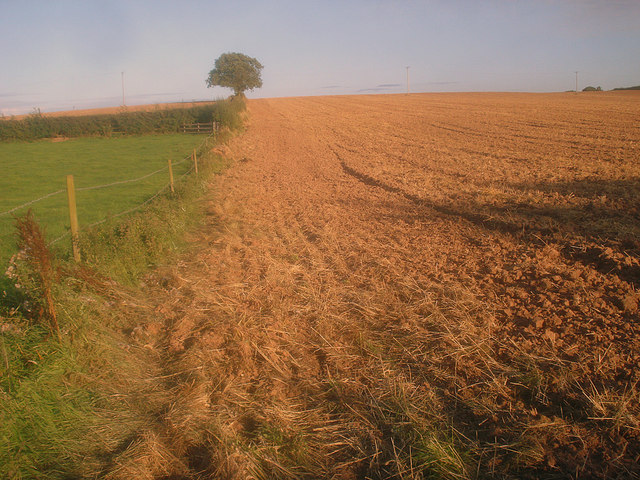 Recently harvested corn field near Stordon Grange