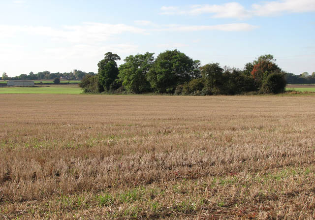 Copse surrounded by fields